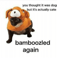 @doggo.meme.v3 backup dankmemes autism cringe meme memes autistic nicememe lmao lol kek lmfao immortalmemes filthyfrank 4chan ayylmao weeaboo anime vaporwave wtf fnaf jetfuelcantmeltsteelbeams johncena papafranku edgy mlg テールナー ポルノの: you thought it was dog  but it's actually cate  bamboozled  again @doggo.meme.v3 backup dankmemes autism cringe meme memes autistic nicememe lmao lol kek lmfao immortalmemes filthyfrank 4chan ayylmao weeaboo anime vaporwave wtf fnaf jetfuelcantmeltsteelbeams johncena papafranku edgy mlg テールナー ポルノの