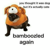 Bamboozled again 😩: you thought it was dog  but it's actually cate  bamboozled  again Bamboozled again 😩