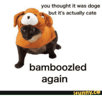 Doge Meme: you thought it was doge  but it's actually cate  bamboozle  again  Funny CO