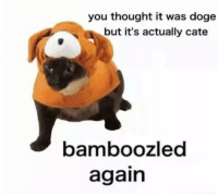 Cate: you thought it was doge  but it's actually cate  bamboozled  again