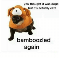 today was lit??? how was your day: you thought it was doge  but it's actually cate  bamboozled  again today was lit??? how was your day
