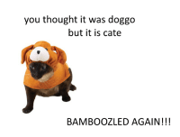 Every time: you thought it was doggo  but it is cate  BAMBOOZLED AGAIN Every time