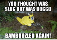 Always gets me: YOU THOUGHT WAS  SLUG BUT WAS DOGCO  BAMBOOZLED AGAIN! Always gets me
