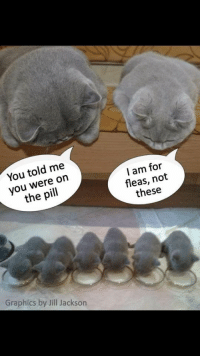 Jackson, The Pill, and You: You told me  you were on  the pill  I am for  fleas, not  these  Graphics by Jill Jackson