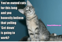 "From Funny Cat Memes: You Ve OWned cats  for this long  and you  honestly believe  that yelling  ""Get down  is going to  Work?  Funny CatMemes.xyz From Funny Cat Memes"