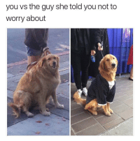 "Memes, Too Much, and Fancy: you vs the guy she told you not to  worry about <p>Fancy puppers is too much competition. via /r/memes <a href=""https://ift.tt/2m78iYu"">https://ift.tt/2m78iYu</a></p>"