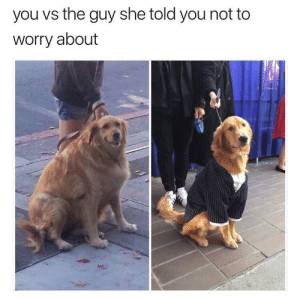 Dank, Memes, and Target: you vs the guy she told you not to  worry about Fancy puppers is too much competition. by Intellectuallygifted FOLLOW HERE 4 MORE MEMES.