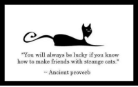 """how to make friends: """"You will always be lucky if you know  how to make friends with strange cats.  Ancient proverb"""