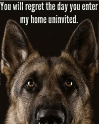 You will regret the day you enter  my home uninvited Where are my k9 buddies at? CopHumor CopHumorLife Police PoliceOfficer ThinBlueLine Cop Cops LawEnforcement LawEnforcementOfficer K9 Dog K9Officer K9Unit DogsOfInstagram GetBit MyHouse Home