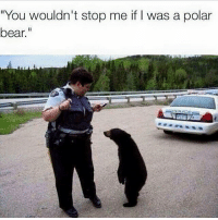 "Bear, Racist, and Dank Memes: ""You wouldn't stop me if I was a polar  bear."" racist"