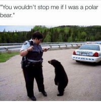 "Bear, Polar Bear, and You: ""You wouldn't stop me if I was a polar  bear."""