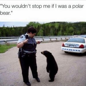 "Tumblr, Bear, and Blog: ""You wouldn't stop me if I was a polar  bear."" memecage:  Discrimination"