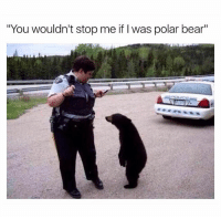 """😂😂😂: """"You wouldn't stop me if l was polar bear""""  DOLCE 😂😂😂"""