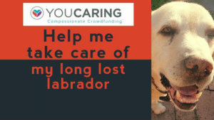 Cats, Cute, and Tumblr: YOUCARING  Compassionate Crowdfunding  Help me  take care of  my long lost  labrador pet-corner:  My Labrador came back after 6 YEARS!!!Visit our pet site!