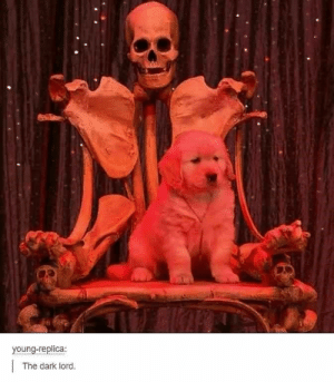 We gathered up some Satanic memes that the Devil himself would smile upon! #Memes #Satan #Religion #Tumblr #Puppy: young-replica:  The dark lord. We gathered up some Satanic memes that the Devil himself would smile upon! #Memes #Satan #Religion #Tumblr #Puppy