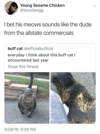 <p>Are you in good hands? (via /r/BlackPeopleTwitter)</p>: Young Sesame Chicken  @loccdawgg  I bet his meows sounds like the dude  from the allstate commercials  buff cat @officialbuffcat  everyday i think about this buff cat i  encountered last year  Show this thread  5/28/18, 9:28 PM <p>Are you in good hands? (via /r/BlackPeopleTwitter)</p>