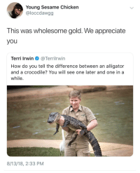 Steve Irwin, Alligator, and Appreciate: Young Sesame Chicken  @loccdawgg  This was wholesome gold. We appreciate  you  Terri Irwin @Terrilrwin  How do you tell the difference between an alligator  and a crocodile? You will see one later and one in a  while  8/13/18, 2:33 PM Steve Irwins son looking just like him