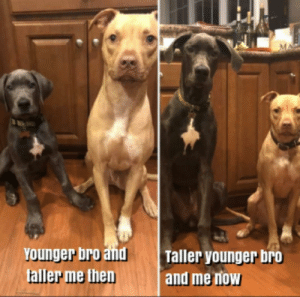 Meirl: YOunger bro and  faller me then  Taller younger bro  and me now Meirl