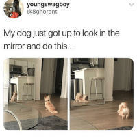 Mirror, Dank Memes, and Got: youngswagboy  @8gnorant  My dog just got up to look in thee  mirror and do this... @doggosdoingthings