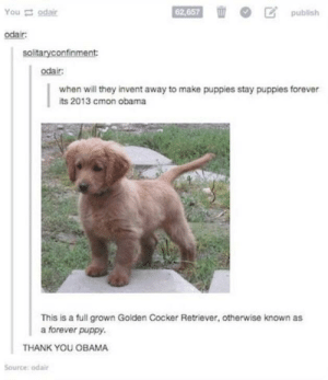 Obama, Puppies, and Thank You: Youodair  62,657  publish  odair  solitaryconfinment  odair:  when will they invent away to make puppies stay puppies forever  ts 2013 cmon obama  This is a full grown Golden Cocker Retriever, otherwise known as  a forever puppy.  THANK YOU OBAMA  Source: odair Good boy