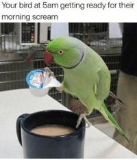 Scream, For, and Morning: Your bird at 5am getting ready for their  morning scream