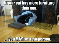 Cats, Memes, and Furniture: Your cat has more furniture  than you,  you MAYbeacat person.  O O O (Sakari) ,,,three cat trees, only one sofa..