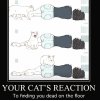 Cats, Memes, and Prince: YOUR CAT'S REACTION  To finding you dead on the floor THE ACCURACY OF THIS THO😂😭 I fainted in my kitchen one night, back in 2016. I already had a broken leg, with a cast up to my knee, but I took an unexpected nap on my face and broke my hand in the process. Anyway- my Prince Puffin acted much like this as I lay dazed, fading in and out of consciousness with my jaw jammed shut from landing squarely on my chin, waiting for help to arrive..🐈🆘🐈 @catsaresuchdicks