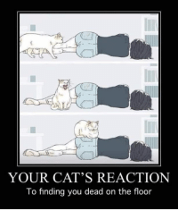 Cats, Memes, and 🤖: YOUR CAT'S REACTION  To finding you dead on the floor