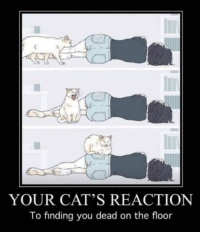 Sun Gazing: YOUR CAT'S REACTION  To finding you dead on the floor Sun Gazing