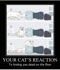 You Dead: YOUR CAT'S REACTION  To finding you dead on the floor