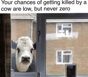 meirl: Your chances of getting killed by a  Cow are low, but never zero meirl