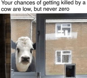 srsfunny:  So now you know: Your chances of getting killed by a  Cow are low, but never zero srsfunny:  So now you know