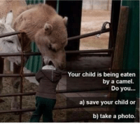 http://t.co/rozJ4IbhP8: Your child is being eaten  by a camel.  Do you  a) save your child or  b) take a photo. http://t.co/rozJ4IbhP8