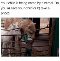 Or c) wait for the better angle-filter: Your child is being eaten by a camel. Do  you a) save your child or b) take a  photo Or c) wait for the better angle-filter
