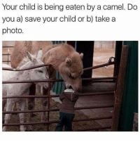 😂😂😂 . @DOYOUEVEN 👈🏼 FREE SHIPPING ON ALL ORDERS 🌍🚚 ENDS TODAY! LINK IN BIO ✔: Your child is being eaten by a camel. Do  you a) save your child or b) take a  photo. 😂😂😂 . @DOYOUEVEN 👈🏼 FREE SHIPPING ON ALL ORDERS 🌍🚚 ENDS TODAY! LINK IN BIO ✔