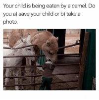 😂😂😂😂: Your child is being eaten by a camel. Do  you a) save your child or b) take a  photo 😂😂😂😂