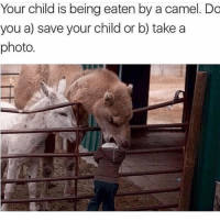 I'm dying at what @memezar just posted 😂😂: Your child is being eaten by a camel. Do  you a) save your child or b) take a  photo I'm dying at what @memezar just posted 😂😂