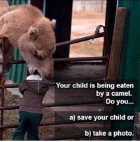Cameleer: Your child is being eaten  by a camel.  Do you...  a) save your child or  b) take a photo.