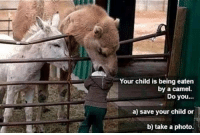 Obviously B: Your child is being eaten  by a camel.  Do you...  a) save your child or  b) take a photo. Obviously B