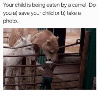 Eaten by a camel: Your child is being eaten by a camel. Do  you a) save your child or b) takea  photo. Eaten by a camel