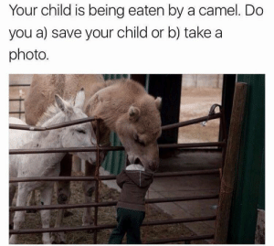 me irl: Your child is being eaten by a camel. Do  you a) save your child or b) take a  photo. me irl