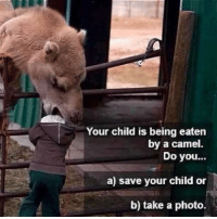 Cameleer: Your child is being eaten  Do you...  a) save your child or  b) take a photo.  by a camel