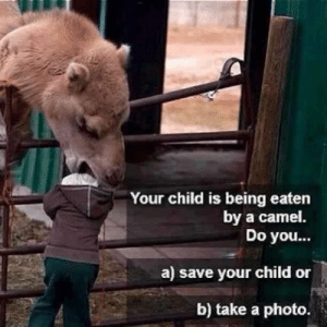 Answer, Camel, and Photo: Your child is being eaten  Do you...  a) save your child or  b) take a photo.  by a camel The answer is obvious