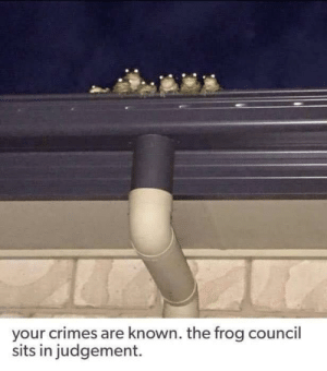meirl: your crimes are known. the frog council  sits in judgement. meirl