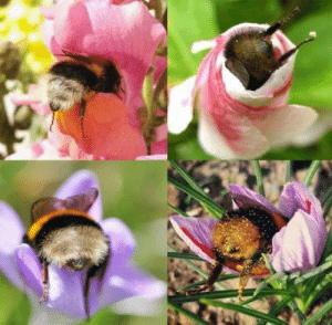 Your daily dose of bumblebeebutts: Your daily dose of bumblebeebutts