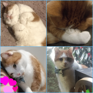 Your Daily Dose of Good: Bellemere, the real-life, Lucky Cat!: Your Daily Dose of Good: Bellemere, the real-life, Lucky Cat!
