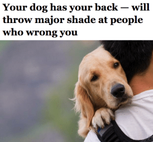 Dogs, Food, and Shade: Your dog has your back - will  who Wrong you penroseparticle:  salon:  New research led by Kazuo Fujita of Kyoto University has found that your dog is the best wing man/woman. The researchers tested three groups of 18 dogs by putting them in rooms with their owners as well as two strangers. The owners were tasked with opening a box, and solicited help from the two other people in the room (sometimes they would help and sometimes they would refuse). After watching their owners either be rebuffed or aided, the dogs were offered food by the strangers — and were much more likely to ignore the stranger who had been unkind to their owner. In a study, dogs refused food from people who had slighted their owners  this is the kind of groundbreaking scientific research I want to see