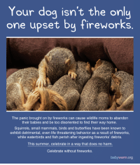 Life, Memes, and Moms: Your dog isn't the onlu  one upset by fireworks  The panic brought on by fireworks can cause wildlife moms to abandon  their babies and be too disoriented to find their way home.  Squirrels, small mammals, birds and butterflies have been known to  exhibit detrimental, even life threatening behavior as a result of fireworks,  while waterbirds and fish perish after ingesting fireworks' debris.  This summer, celebrate in a way that does no harm.  Celebrate without fireworks.  babywarm.org Veterans with PTSD will thank you too.