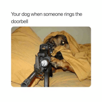 Funny, Gaming, and Dog: Your dog when someone rings the  doorbell Ayo, relax Fido gatdamn. 😂🐶🤣 (follow @tryhard my gaming channel) 🎮
