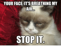 Meme, Grumpy Cat, and Cat: YOUR FACE IT'S BREATHING MY  AIR  STOP IT  quick meme con join Grumpy Cat. for more ( :